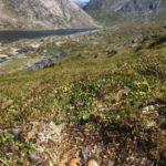Rypereir  med  utsikt  over  et  fjellvann.  Hvilket?