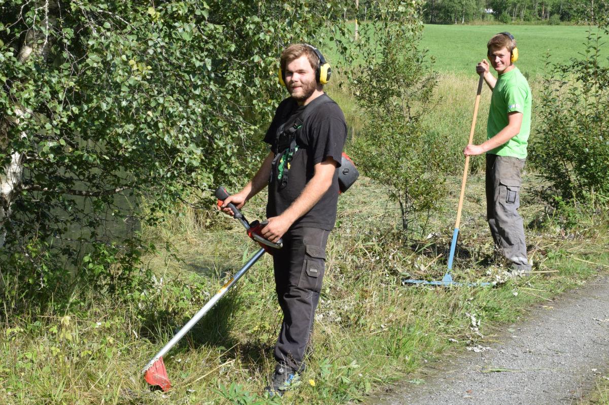 Kantslått - Emil Thorp brukar kantslåmaskin i staden for ljå, medan Ola Kvendset brukar riva.  Foto: Jon Olav Ørsal