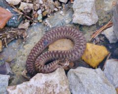 Liten orm ute på første vinterdagen !