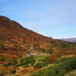 Ørsalsetra  omgitt  av  vakre  høstfarger