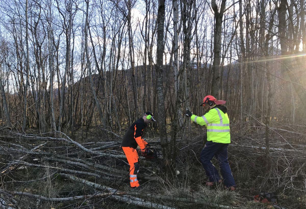 Skogrydding til Toåa tursti. Foto: Dordi J H