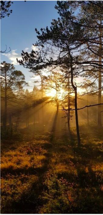 Skogsoppgang  i  solen  blei  månadens  bilete