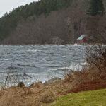 Ruskever  på  fjorden.