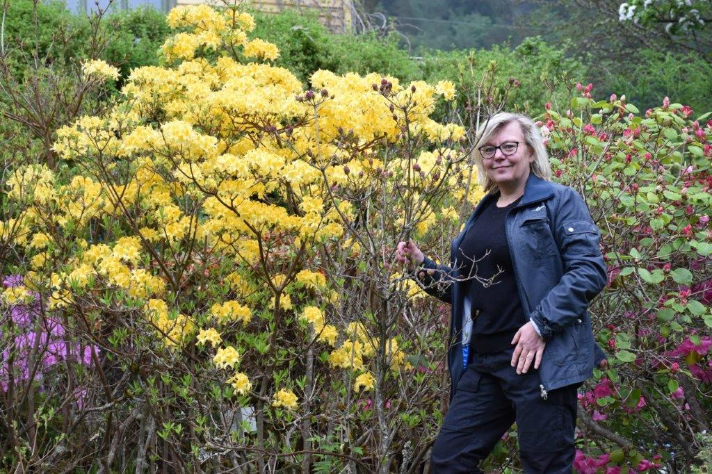 Vi har rundt 350 forskjellige variantar med rododendro - i alle farger, fortel Katarina Wedelsbäck Bladh som er fagleg leiar i arboretet.
