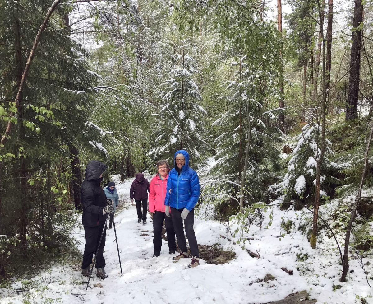 Vinterdag i mai. Det både rasa snø og draup frå trea. Foto: Dordi J H