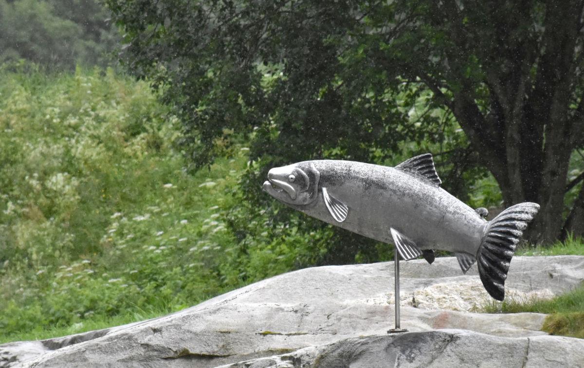 Ethelbert treng selskap - no blir det regnvêr og da blir det nok betring i laksefisket.  Foto: Jon Olav Ørsal