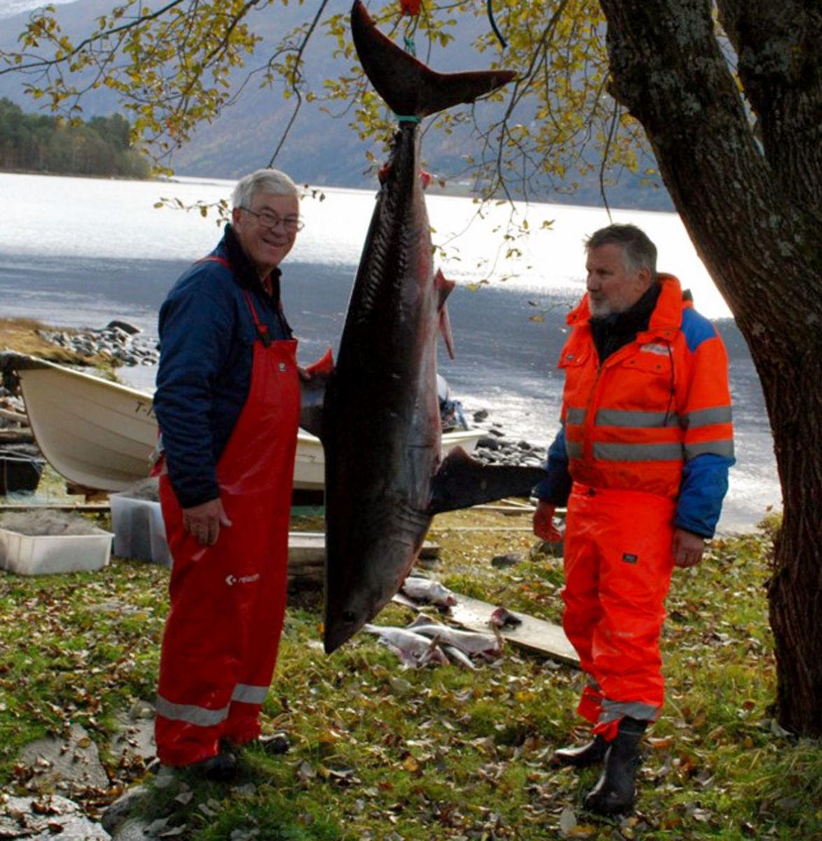 Leif Inge Røe og Lars Furu fikk storfisk i garnet natt til lørdag.  Foto: Sverre Kjølstad