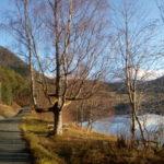 Bjørnson  valgte  seg  april  ,  jeg  tok  turen  til  Haltbakken