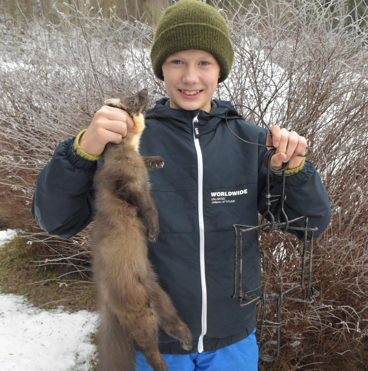 Det var ein ung hannmår som Nils fikk i fella.  Foto: Jon Olav Ørsal