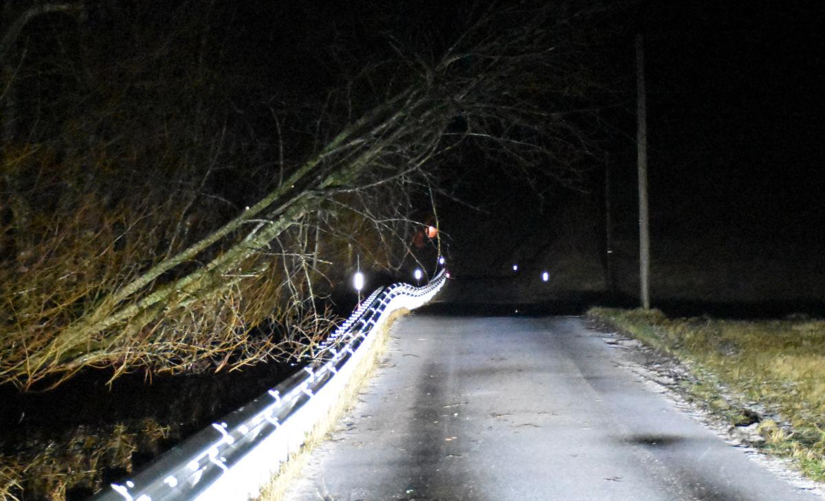 Trefall ved Brusetmelan var problemfritt å passere for skulebussen