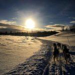 Hundesledetur  på  Røros.