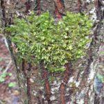 Naturen  viser  omsorg  på  dette  treet!