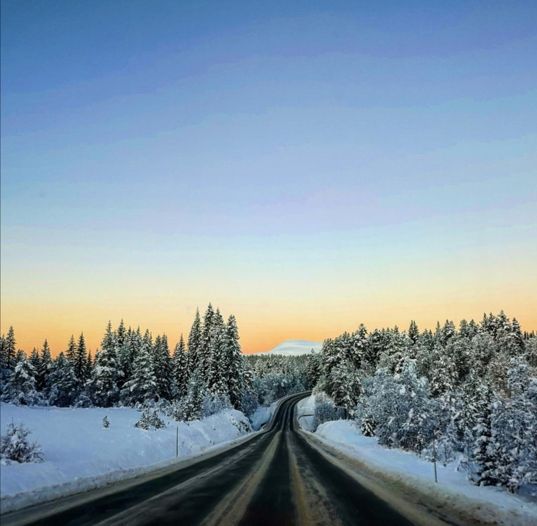 Månadens bilete fint lys over Nordmarka