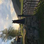 Elg  (hoinn)  i  solnedgang
