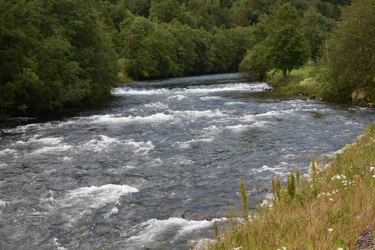Fine tilhøve i elva no - her frå Hagan, nedafor Brusetbrua nærmare Brusetmelan.  Foto: Jon Olav Ørsal