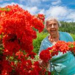 Rododendron  i  Kittys  hage