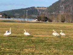 Storfint besøk på Anderstuekrå