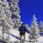 Mot store hvite skogen tar jeg veien.