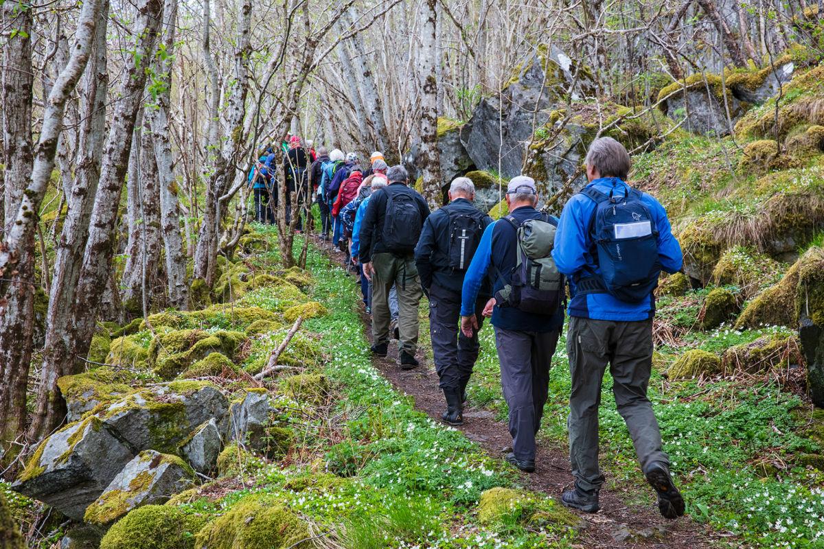 Fjellgruppa på årets første tur. Her opp frå Kallset. Foto: Anne V. Einum
