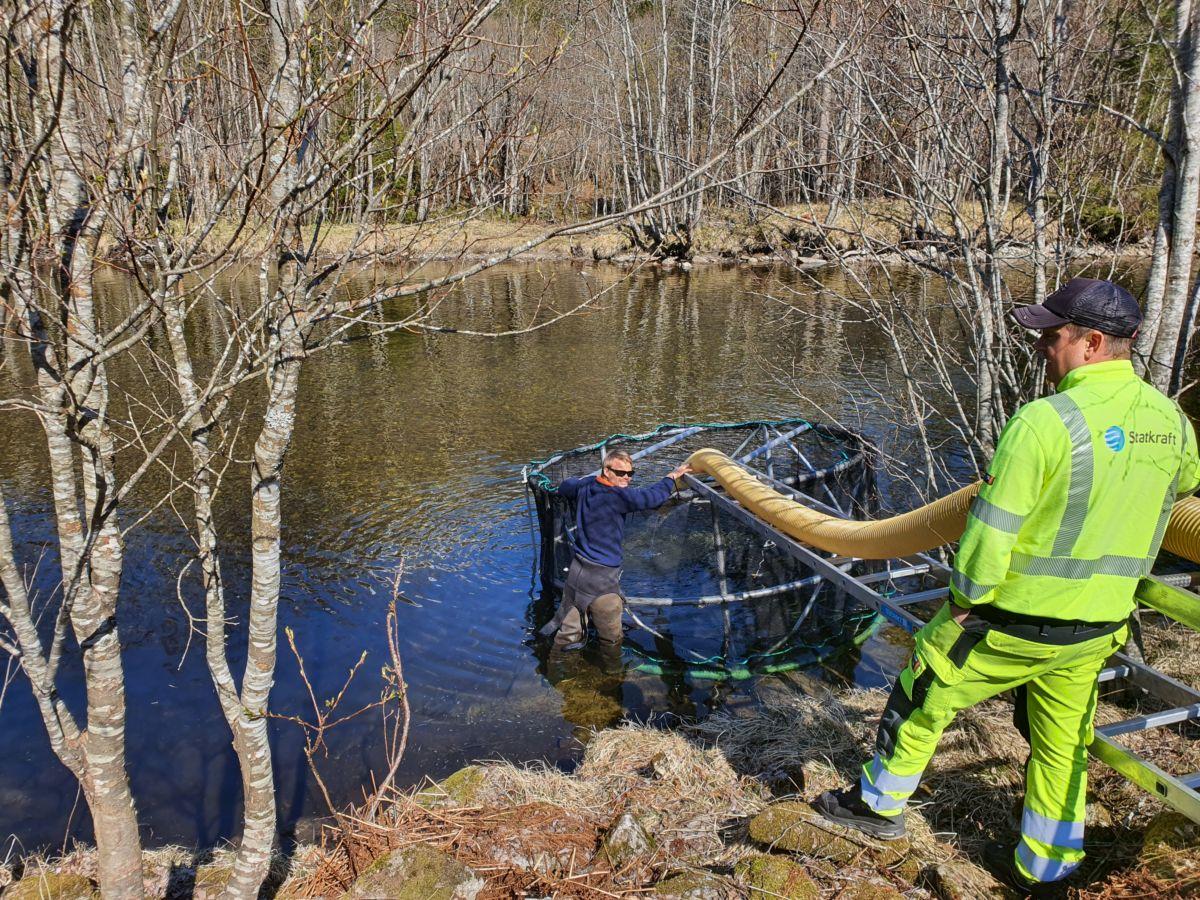 Tommy Thunestveit (nede ved elva) og Bjørnar Aasbø passar på at all smolten kjem over i laksemerda. Foto: B G Ansnes