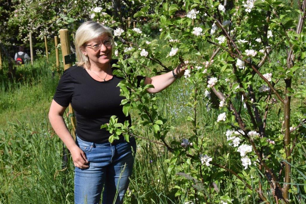 Akkurat no står frukthagen i full flor, og det er ein imponerande skue fortel Katarina Wedelsbäck Bladh som er fagleg ansvarleg i arboretet.  Foto: Jon Olav Ørsal